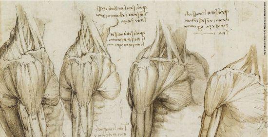 人体艺术专业人体艺术露逼汤水的那种_达·芬奇1510年冬天手绘的人体解剖素描将在爱丁堡艺术节上首次公开