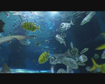 动物与自然电影周展映电影:《海中小人国》
