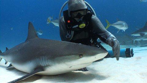 动物与自然电影周展映电影:《拥抱我》