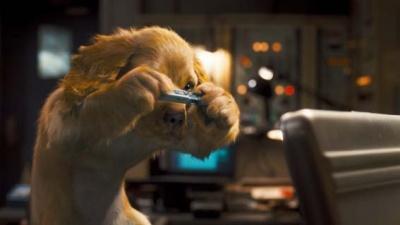 2010年不可错过的好莱坞电影-《猫狗大战2》