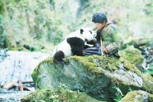 迪斯尼投拍《熊猫回家路》2009年国内上映(图)