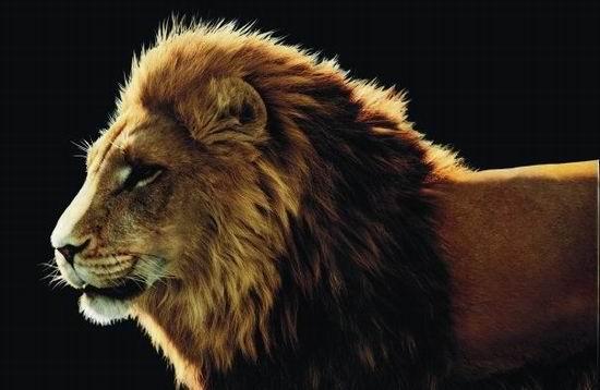 最关键人物:狮王阿斯兰; 纳尼亚传奇2贾斯潘王子电影介绍;; 最关键