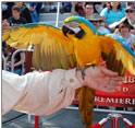 加勒比海盗3--鹦鹉