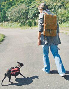 朱孝天上传了一张与旧爱林熙蕾共养爱犬Kyla的合照,似有无限感触
