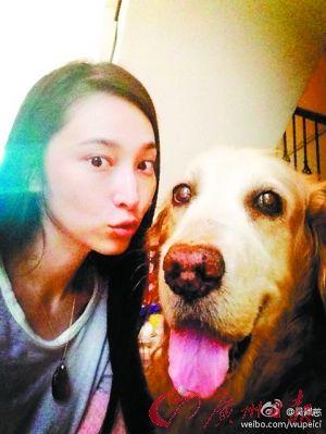 吴佩慈的宠物狗成为两人红娘