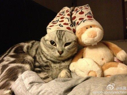 姚晨为猫咪戴上袜子帽子
