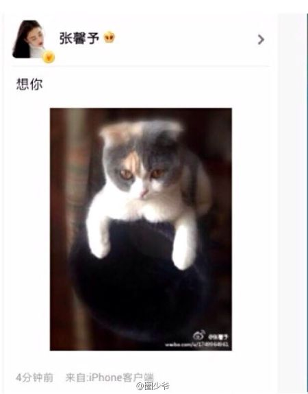 """张馨予晒出两人同养的一只猫表示""""想你"""""""