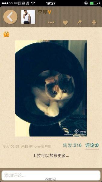 李晨也发了这只猫的照片