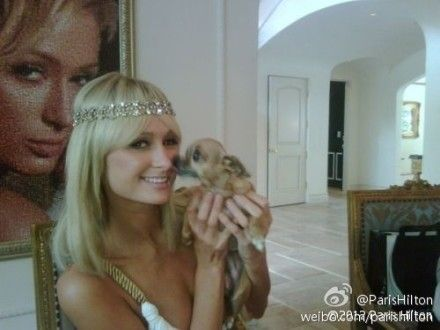 好莱坞名媛希尔顿怀抱小狗显可爱