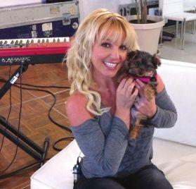 布兰妮收养的流浪狗Hannah(汉娜)