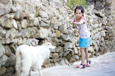 田亮的女儿田雨橙放羊挺在行,上期节目中一直在哭的她,这次表现得非常不错。