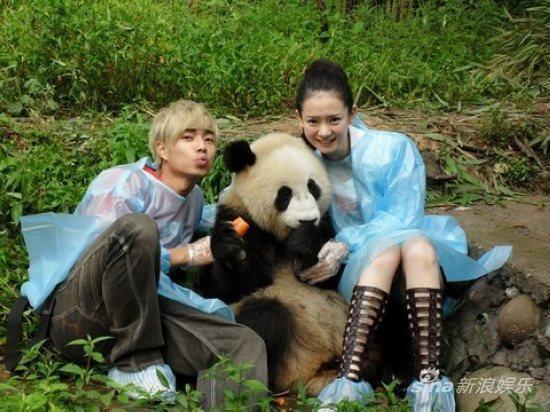 壁纸 大熊猫 动物 550_412