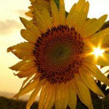 夕阳与时光