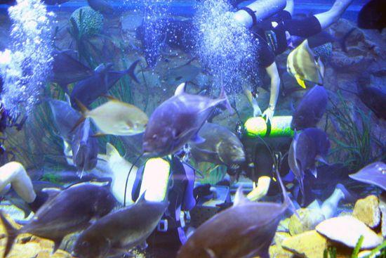水族馆中的鱼很多