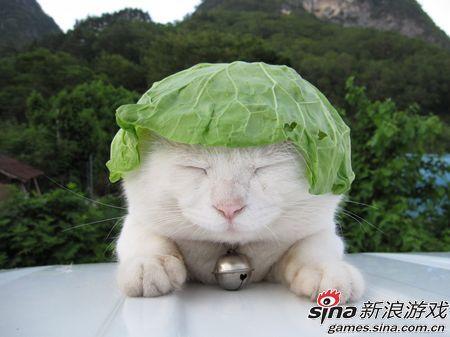 你好,我是卖白菜的。(版权所有:猫叔)