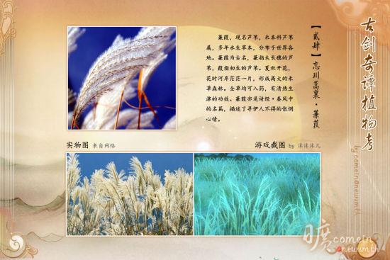 蒹葭六孔陶笛曲谱
