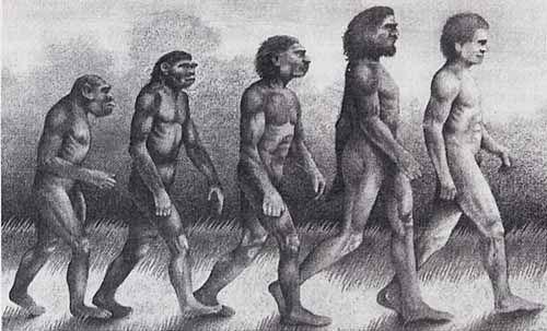 人类进化图