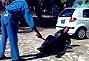 苏丹一名妇女当街遭警察鞭刑现场曝光