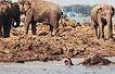 博友实拍:水淹曼谷大象满街跑(图)