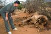 姚明目击遭猎杀大象