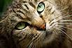 遇见猫国震撼心灵