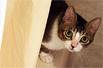猫咪如何玩躲猫猫