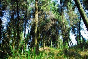 通往南充 森林天堂 的路在何方