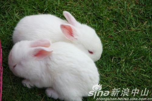 奖品之一:可爱小白兔子