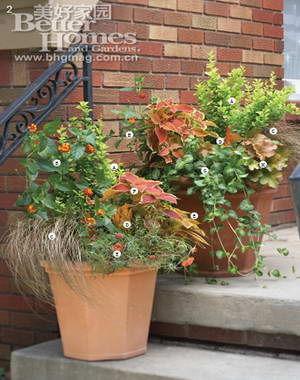 欧式田园风格 角落明星的灌木盆栽(2)