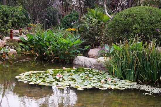 园林景观手绘效果图水边