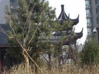 金都・杭城 实景图 校区内绿化