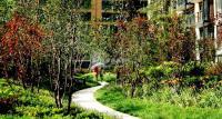 北京华侨城 实景图 园林