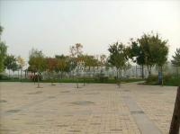 百旺茉莉园 实景图 广场