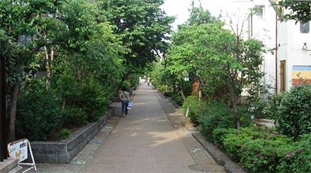 用植树带和便道(步行道和自行车道)为主体的绿地,将公园,学校,商店