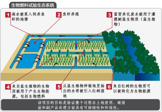 生物燃料试验生态系统示意图