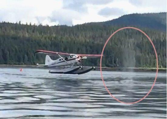 水上飞机在降落前一刻,海面突然冒出鲸鱼喷出的水柱。