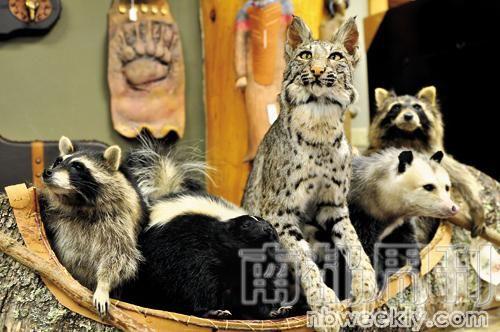 商店里各种小动物标本