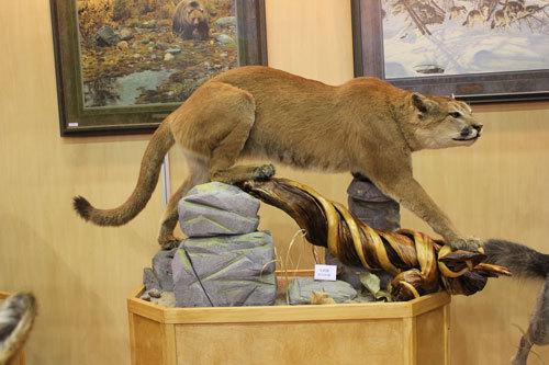 非洲珍藏动物标本