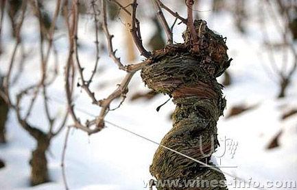 noir),每公顷平均种植1万株葡萄树,年产量3000-6000瓶多不等,例如2008