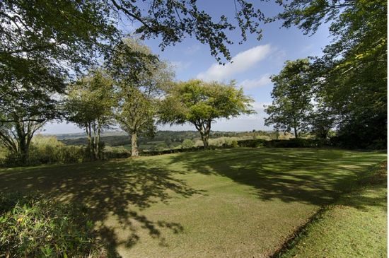 小院绿树风景图