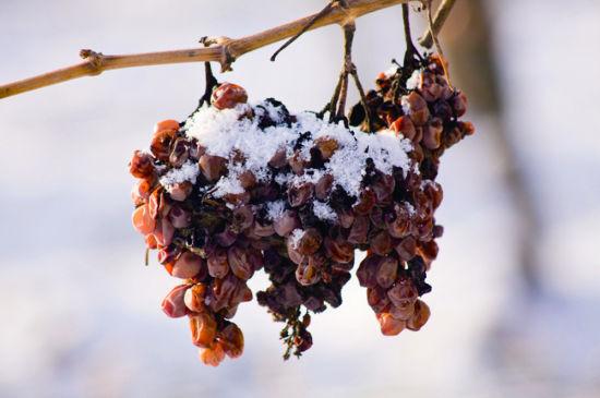 甜葡萄酒酿造方法