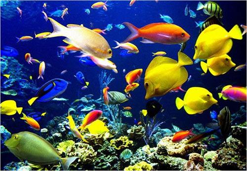 海里游的动物图片