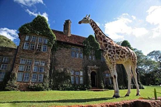 国家森林公园   长颈鹿山庄始建于20世纪30年代,位于肯尼亚内罗毕市郊