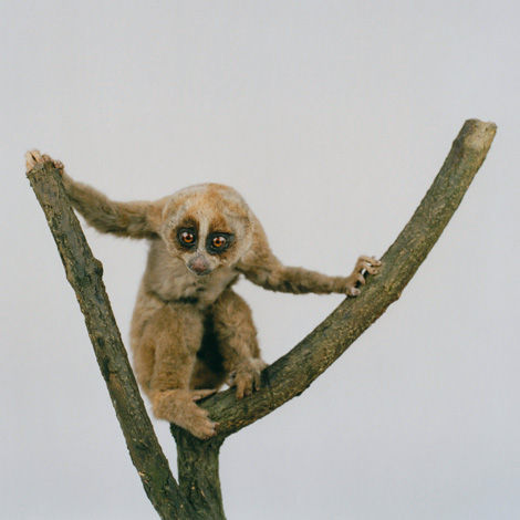 濒临灭绝的动物肖像 快灭亡灭绝的动物都有哪些