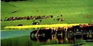 在草原上驰骋 木兰围场自驾全攻略