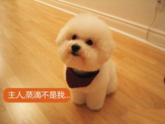 粉碎谣言:狗狗的尿液会引起爆胎