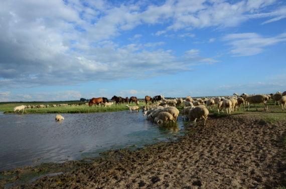17草原、泡子、马儿、绵羊,这才是草原啊