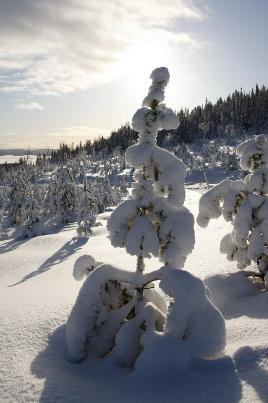 首先,欢迎来到瑞典北部冰天雪地的阿杰博洛格