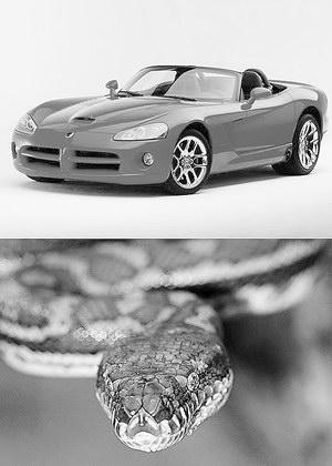 汽车与动物的浪漫情缘