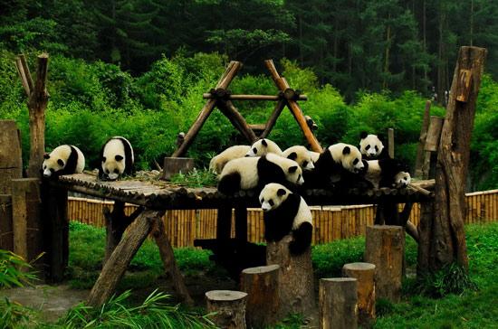 奔驰与中国保护大熊猫研究中心启动合作计划
